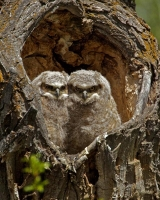 bird;owl;vertical
