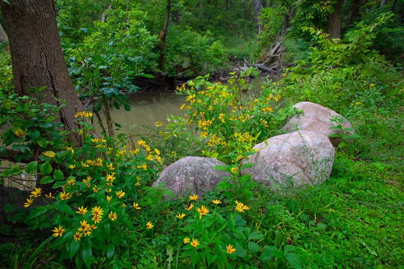 Flowers;Wild Flowers;yellow;green;stream;creek;Indiana;Midwest;rural;beauty;peaceful;Howard County
