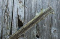 Barn;weathered-wood;fence-post;Howard-County;Indiana;Midwest;antique;old;rural;Fm