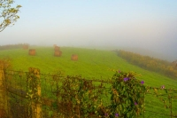 Hay-bales;round;farm;Kentucky;rural;green;fog;Midwesst;purple