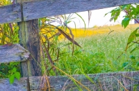 Fence;old-fence;antique;rural;farm;weathered-wood;gray;green;gold;Kentucky;Midwest;Richmond