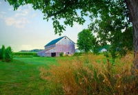 Barn;barns;farm;green;Indiana;Midwest;Cass-County;rural;white;corn;gold;rural;weathered-wood