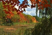 Fall-Colors;Orange;Yellow;Green;Michigan;Midwest;Pond