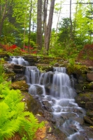 Flowers;Flower;Indiana;Spring;Spring-Flowers;Pink;Green;Woods;White;Red;Gibson-County;Pink;Waterfall