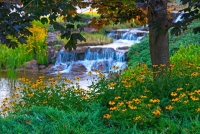 Flowera;nature;yellow;green;waterfall;stream;brook;Indiana;Midwest;Hamilton-County