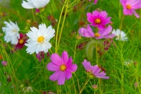 Flowers;green;pink;white;Howard-County;Indiana;Macro;Flora;Nature;Indiana;wild-flowers