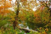 Indiana;Midwest-usa;rural;Fall-Colors;Fall-leaf-color;orange;stream;white;beauty;peaceful;Green;Howa