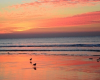 Sunrise;South-Carolina;SC;South-West;Costal;beach;birds;orange;gold