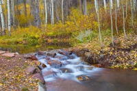 Stream;movimg-water;waterfall;Colorado;Aspen;Brook;Orange;Fall-Colors;gold;west;Creek;Aspens