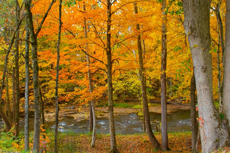 Stream;woods;creek;moving water;Cass County;Indiana;Midwest;fall colors;orange;yellow;nature;trees;leaves