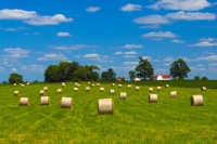 Farm;farming;hay-field;barn;barns;green;hay;red;golden;rural;Ohio;Midwest;round