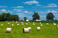 Farm;farming;barn;Ohio;green;gold;red;white;rural;Midwest;hay-field;round;rolls