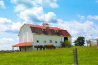 Barn;barns;farm;farming;animals;Horses;Ohio;Midwest;white;red;brown;green