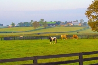 Horse;Barns;Kentucky;Lexington;KY;Animal;fence;Midwest;farm
