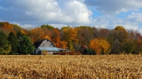 Barn;Farm;Corn-field;fall-colors;Indiana;In;ornage;brown;gold;Midwest