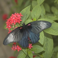 red;green;horizontal;square;butterfly;leaves;flowers;nature