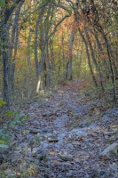 nature;busiek-state-park;ozark;branson;mo;missouri;fall;foliage;trees;color;autumn;vertical