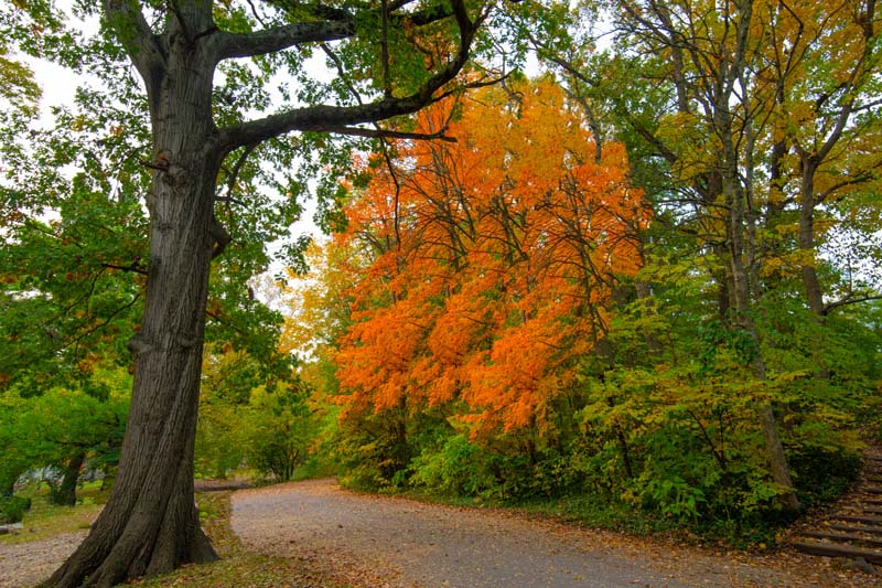 Road;country road;fall colors;fall leaf color;Indiana;Mdiwest usa;rural;beauty;orange;green;tree;beauty in nature;leaf