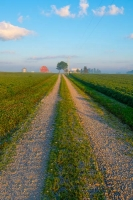 Road;country-road;Indiana;Midwest;rural;barn;farm;field;peaceful;morning;Miami-County;Vertical