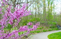 Flowers;Spring-Flowers;Pink;green;Red-Bud;Howard-County;Indiana;Macro;Flora;Nature