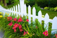 Flowers;Red;rust;orange;green;Indiana;Howard-County;flora;Nature;Picket-Fence;white
