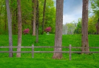 Fence;rail-springfence;Indiana;Midwest;green;pink;trees;grass;Howard-County;rural;Redbud-trees
