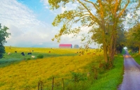 Road;Country-Road;Pasture;Cows;Animals;Farm;Barn;rural;Kentucy;Midwest;Richmond;green