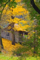Cabin;Old;antiquqe;weathered-wood;orange;yellow;leaves;fall;Carrol-County;Indiana;midwest;vertical