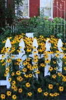 Spring;flowers;yellow;white;green;picket-fence;Indiana;Midwest;Hamilton-County;vertical